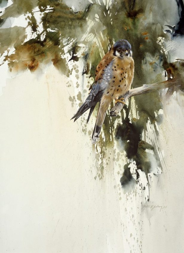Kestrel Watercolor